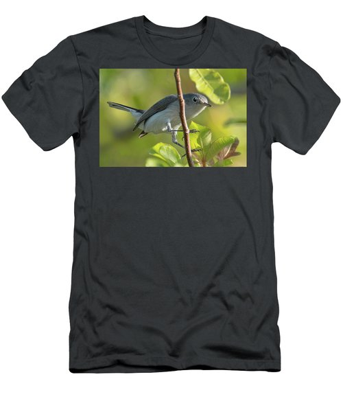 Blue Gray Gnatcatcher Men's T-Shirt (Athletic Fit)