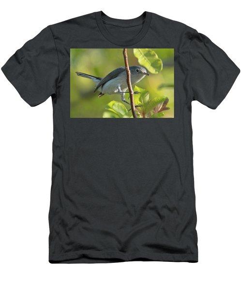 Blue Gray Gnatcatcher Men's T-Shirt (Athletic Fit)
