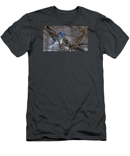 Blue Jay Men's T-Shirt (Slim Fit) by Dan Traun