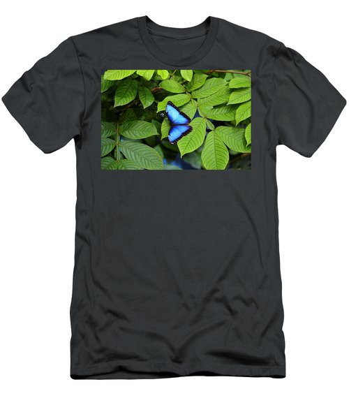 Blue Leaves - Morpho Butterfly Men's T-Shirt (Athletic Fit)