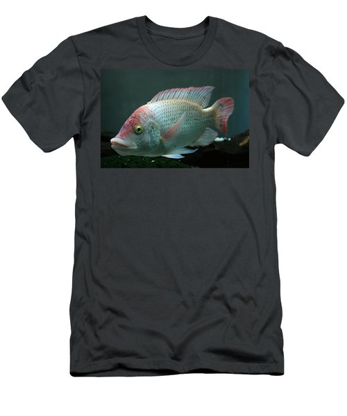 Blushing Tilapia Men's T-Shirt (Athletic Fit)