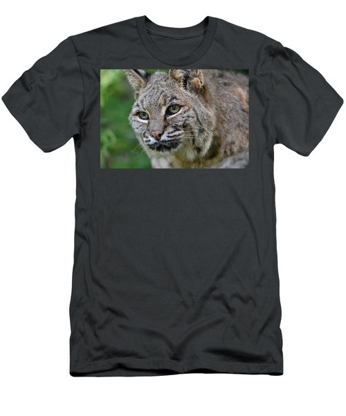 Bobcat In The Trees Men's T-Shirt (Athletic Fit)