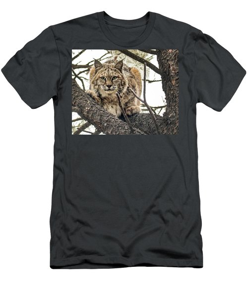 Bobcat In Winter Men's T-Shirt (Athletic Fit)