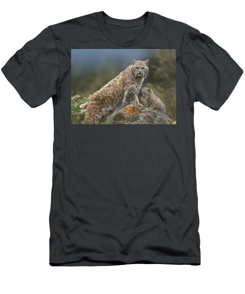 Men's T-Shirt (Athletic Fit) featuring the photograph Bobcat Mother And Kittens North America by Tim Fitzharris