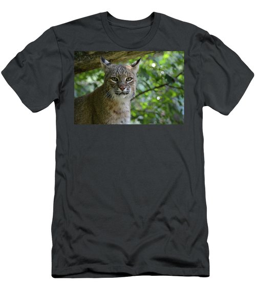 Bobcat Staring Contest Men's T-Shirt (Athletic Fit)