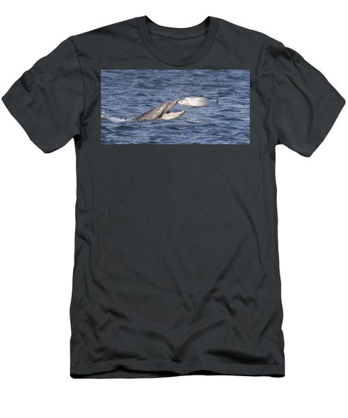 Bottlenose Dolphin Eating Salmon - Scotland  #36 Men's T-Shirt (Athletic Fit)