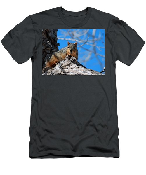 Branch Squirrel Men's T-Shirt (Athletic Fit)