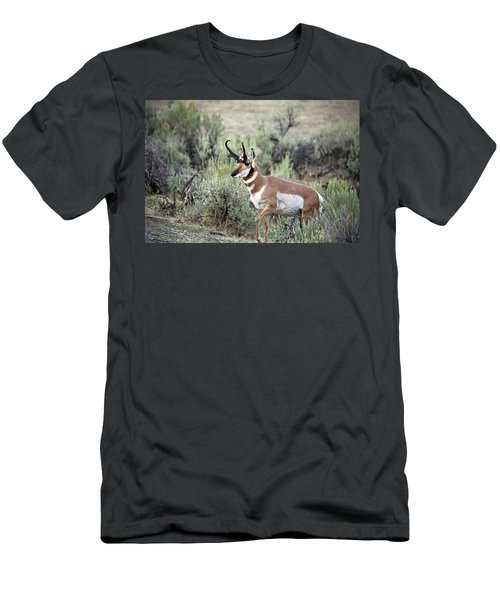 Pronghorn Buck Men's T-Shirt (Athletic Fit)