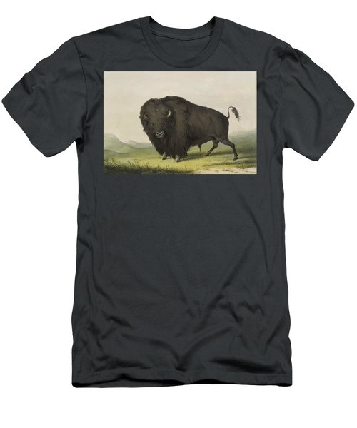 Buffalo Bull Grazing 1845 Men's T-Shirt (Athletic Fit)