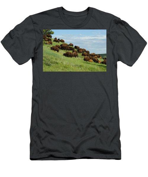 Buffalo Herd Men's T-Shirt (Athletic Fit)