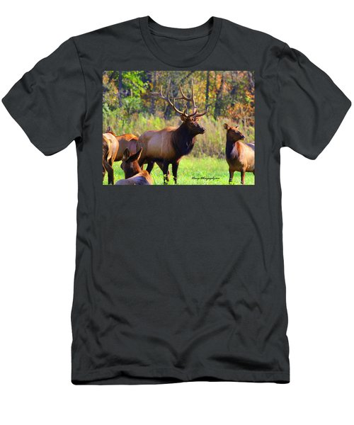 Buffalo River Elk Men's T-Shirt (Athletic Fit)