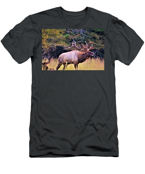 Bull Calling His Herd Men's T-Shirt (Athletic Fit)