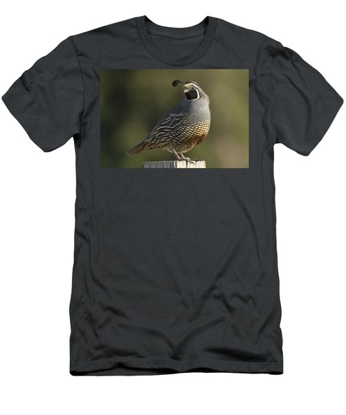 California Quail Male Santa Cruz Men's T-Shirt (Athletic Fit)