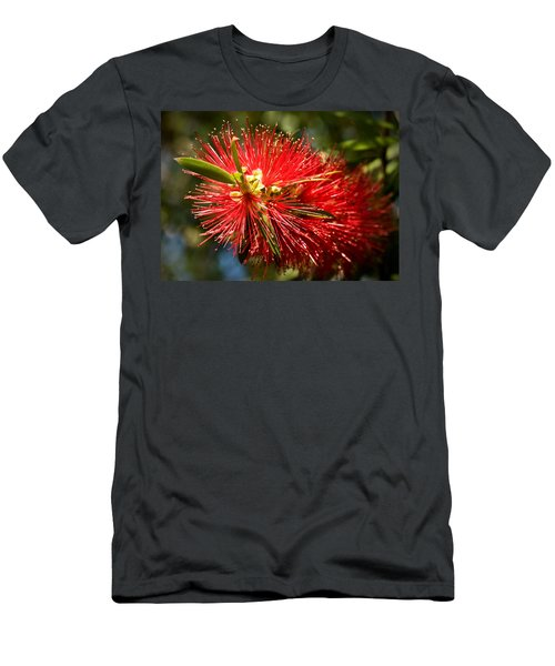 Callistemon Men's T-Shirt (Athletic Fit)