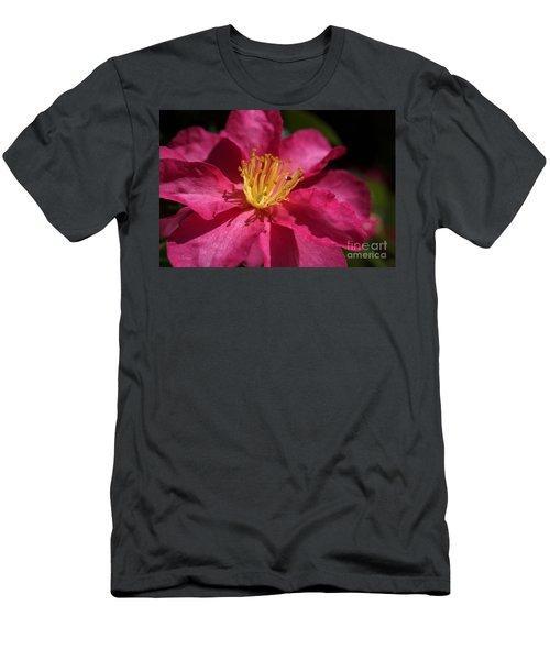 Camellia Sasanqua Men's T-Shirt (Athletic Fit)