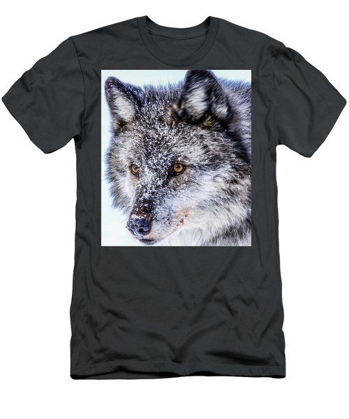 Canadian Grey Wolf In Portrait, British Columbia, Canada Men's T-Shirt (Athletic Fit)