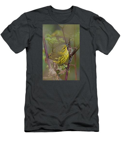 Cape May Warbler In Wees Men's T-Shirt (Slim Fit) by Alan Lenk