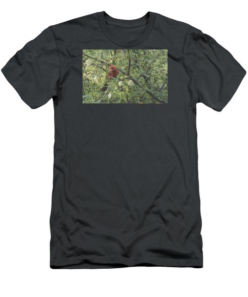 Cardinal In Mesquite Men's T-Shirt (Athletic Fit)