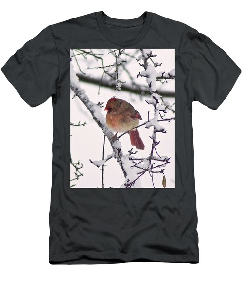 Cardinal In The Snow Men's T-Shirt (Athletic Fit)