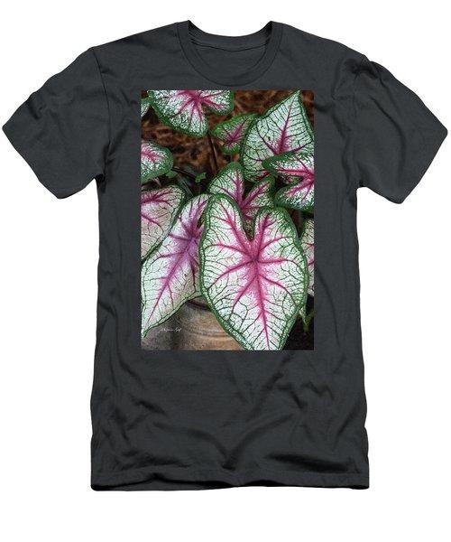 Carefree Caladiums Men's T-Shirt (Athletic Fit)