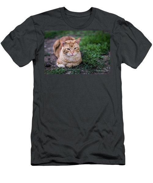 Men's T-Shirt (Athletic Fit) featuring the photograph Cat On Genoves Park Cadiz Spain by Pablo Avanzini