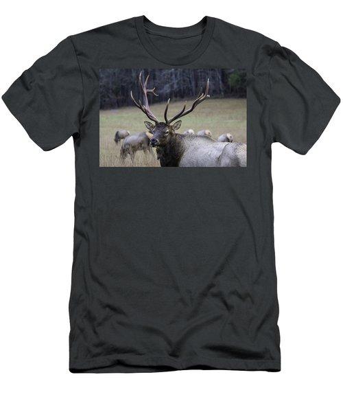 Cataloochee Elk Men's T-Shirt (Athletic Fit)