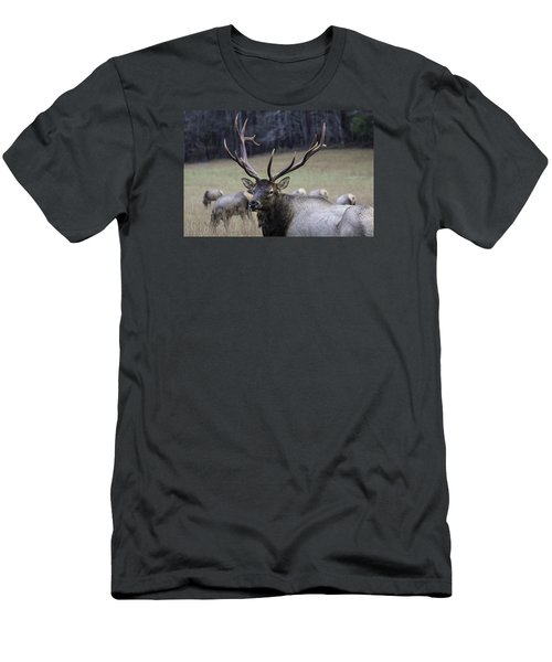 Cataloochee Elk Men's T-Shirt (Athletic Fit)