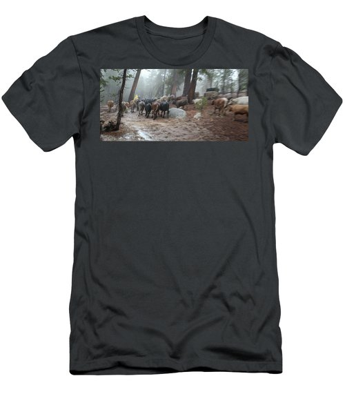 Cattle Moving Men's T-Shirt (Athletic Fit)