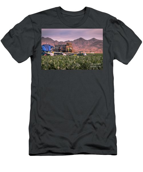 Cauliflower Harvest Men's T-Shirt (Slim Fit) by Robert Bales