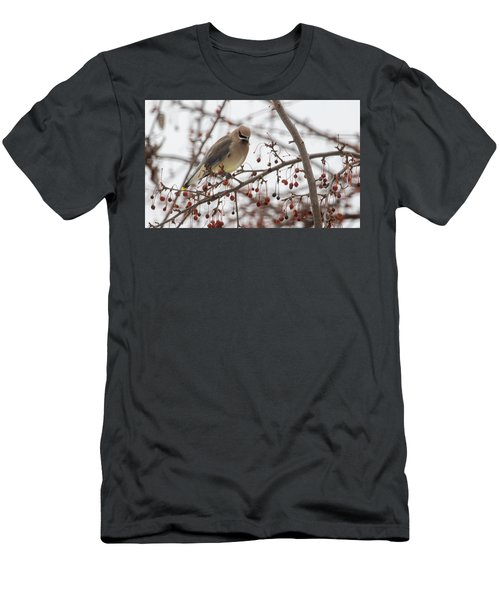 Men's T-Shirt (Athletic Fit) featuring the photograph Cedar Wax Wing  by Betty Pauwels