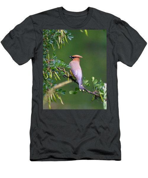 Cedar Waxwing 1 Men's T-Shirt (Athletic Fit)