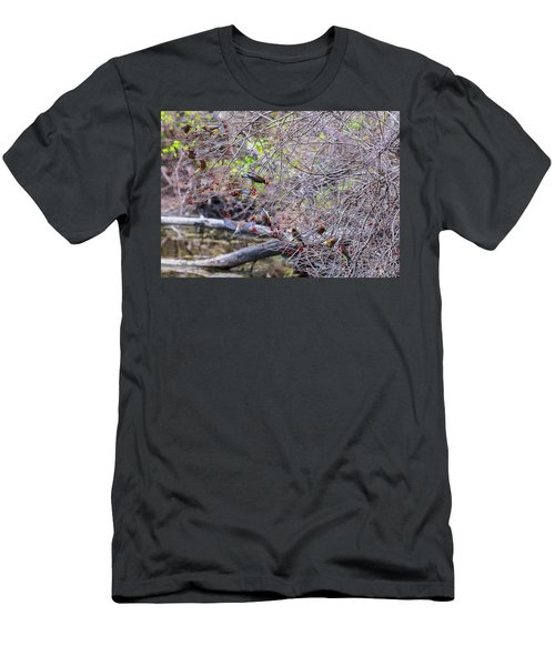 Men's T-Shirt (Slim Fit) featuring the photograph Cedar Waxwings Feeding 2 by Edward Peterson
