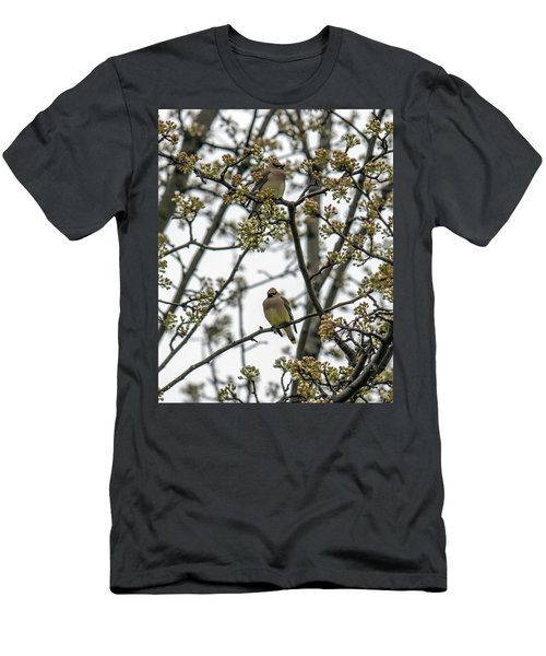 Cedar Waxwings In A Blossoming Tree Men's T-Shirt (Athletic Fit)