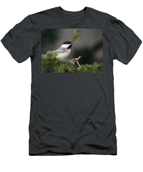 Men's T-Shirt (Slim Fit) featuring the photograph Chickadee In Balsam Tree by Susan Capuano