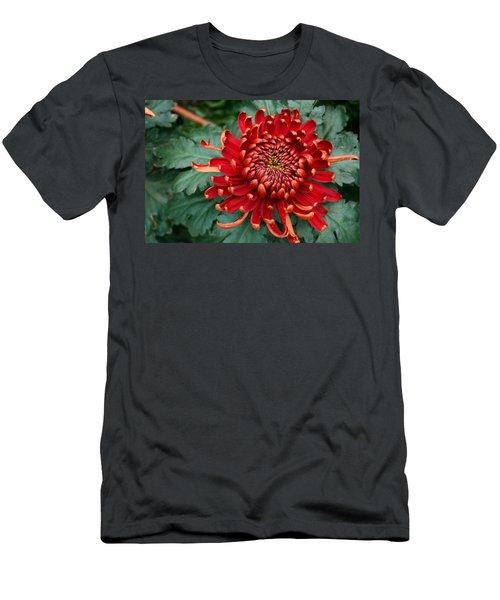 Christmas Chrysanthemum Men's T-Shirt (Athletic Fit)