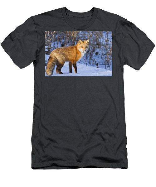 Christmas Fox Men's T-Shirt (Slim Fit) by Mircea Costina Photography