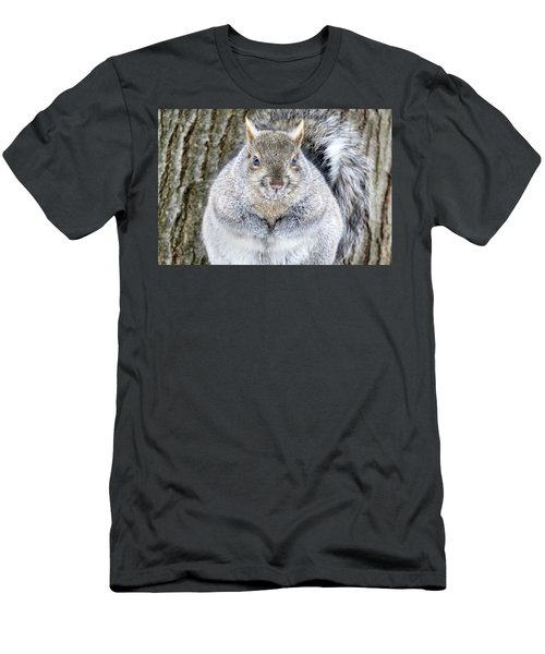 Chubby Squirrel Men's T-Shirt (Slim Fit) by Brook Burling