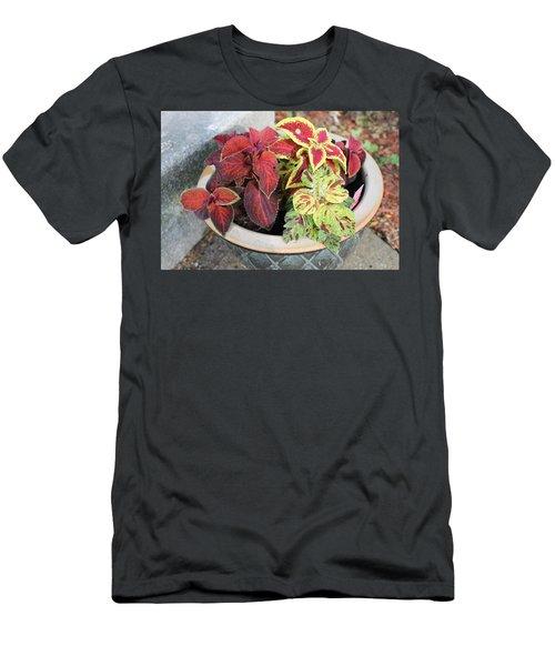 Coleus Men's T-Shirt (Athletic Fit)