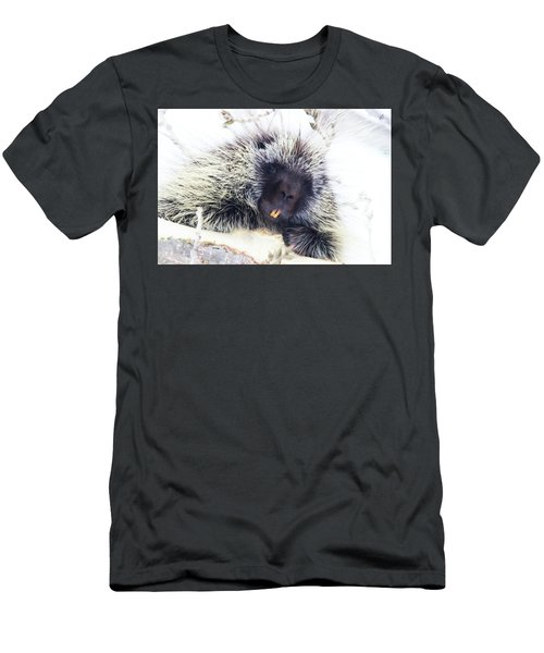 Common Porcupine Men's T-Shirt (Athletic Fit)