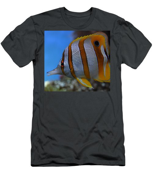 Copperband Butterflyfish Chelmon Rostratus Men's T-Shirt (Athletic Fit)