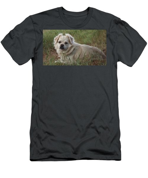 Cotton In The Grass Men's T-Shirt (Athletic Fit)