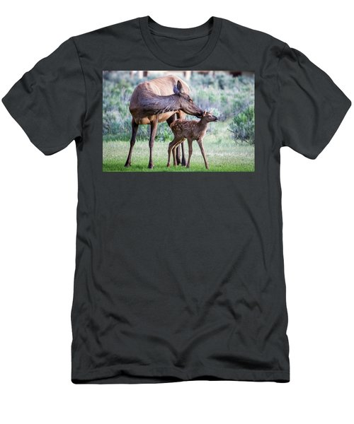 Cow And Calf Elk Men's T-Shirt (Athletic Fit)