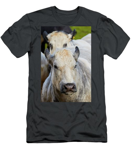 Men's T-Shirt (Athletic Fit) featuring the photograph Cows In A Row by Nick Biemans