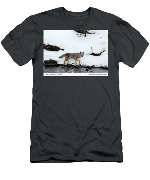 Coyote In Yellowstone National Park Men's T-Shirt (Slim Fit) by Carol M Highsmith