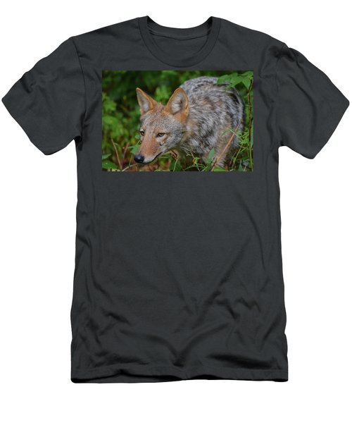 Coyote On The Hunt Men's T-Shirt (Athletic Fit)