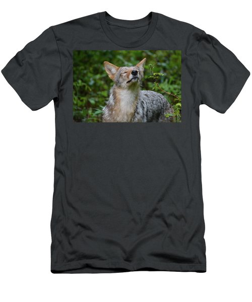 Coyote Soaking Up The Morning Sun Men's T-Shirt (Athletic Fit)