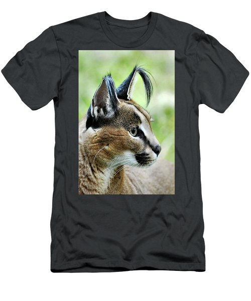 Curious Caracal Men's T-Shirt (Athletic Fit)