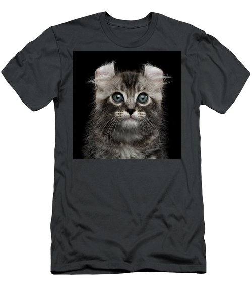 Cute American Curl Kitten With Twisted Ears Isolated Black Background Men's T-Shirt (Slim Fit) by Sergey Taran