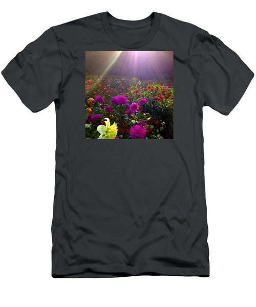 Dahlias Kissed By Sun-rays  Men's T-Shirt (Athletic Fit)