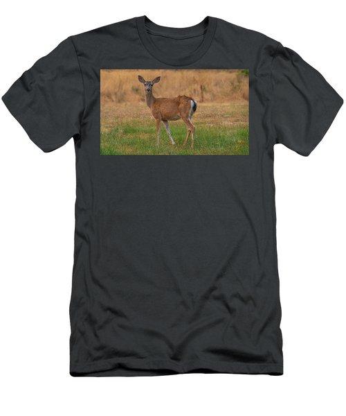 Deer At Sunset Men's T-Shirt (Athletic Fit)